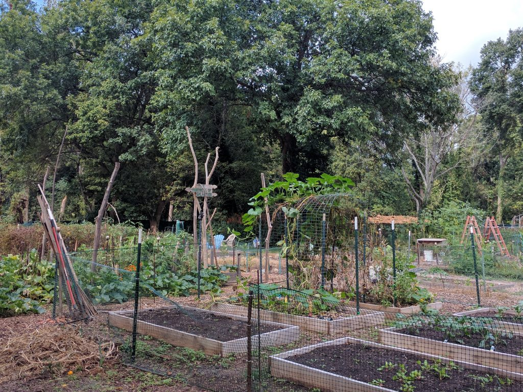 """A community garden in the Dunlavin neighborhood occupies some of the open space created by the County using their """"rainy day"""" fund. Photo by Ashton Rohmer"""