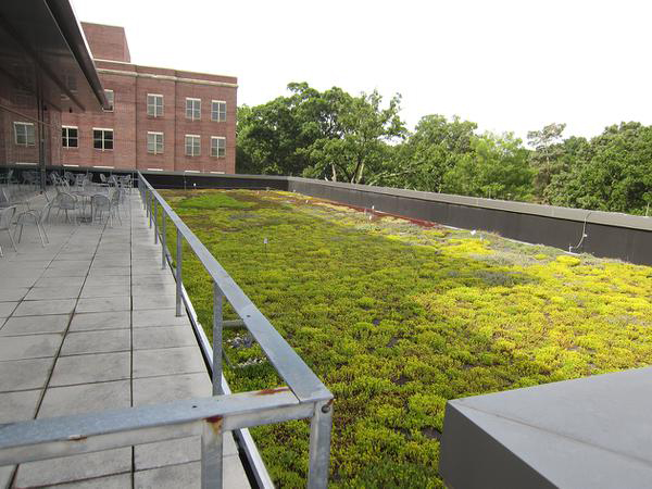 An extensive green roof on the FedEx Global Education Center at the University of North Carolina at Chapel Hill is part of the campus's sustainability initiatives.